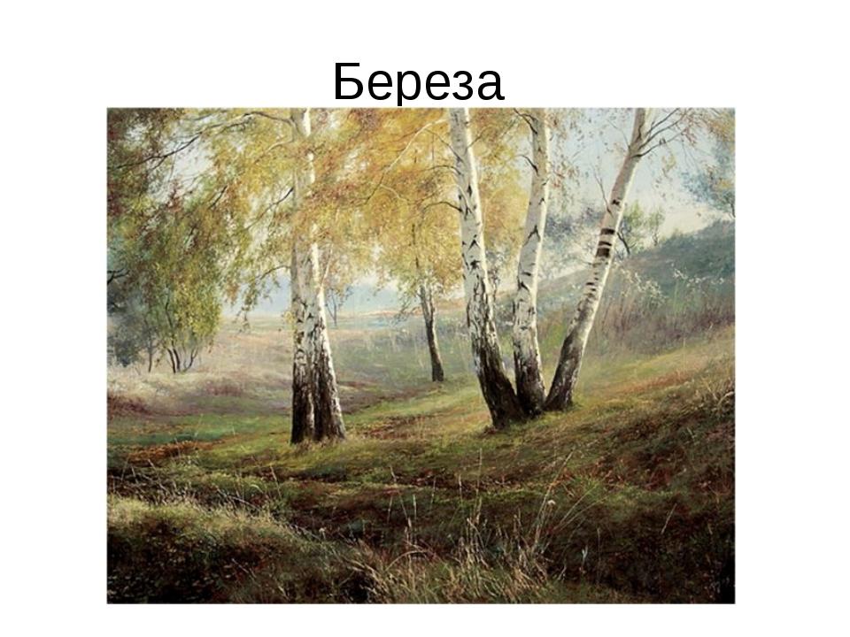 Береза