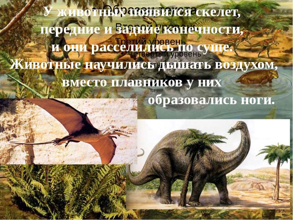 У животных появился скелет, передние и задние конечности, и они расселились...