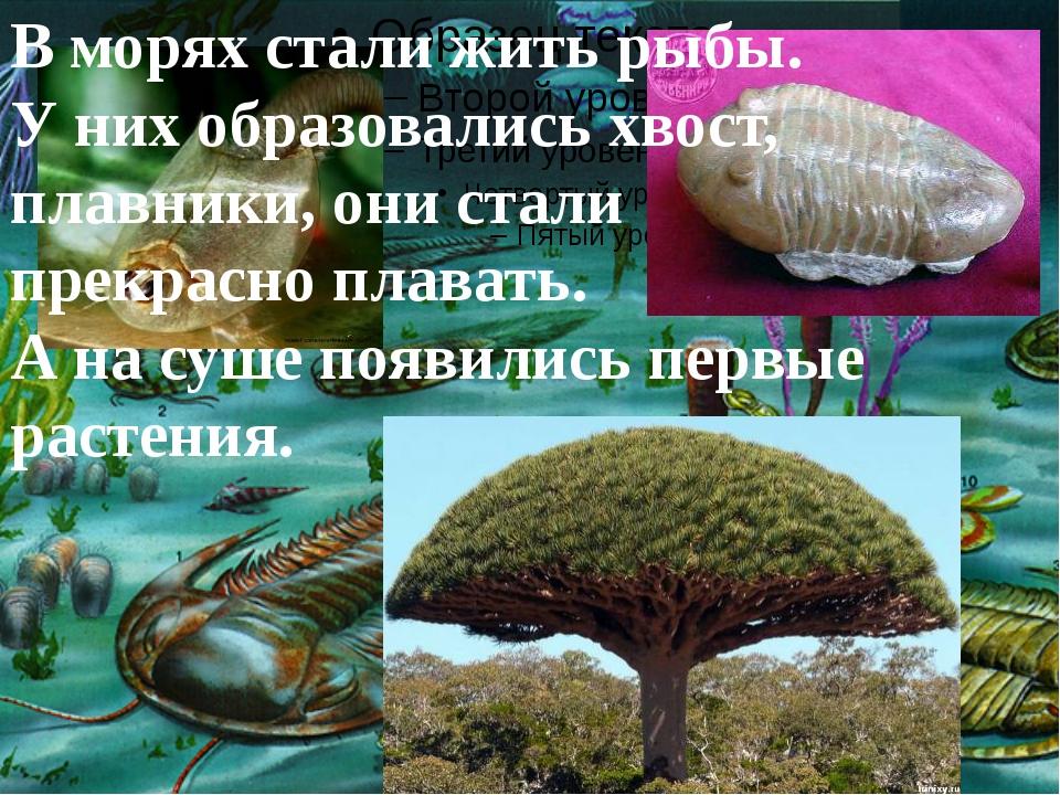 В морях стали жить рыбы. У них образовались хвост, плавники, они стали прекр...