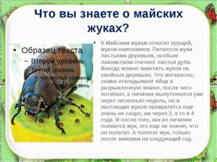 Что вы знаете о майских жуках? К Майским жукамотносят хрущей, жуков-навозник