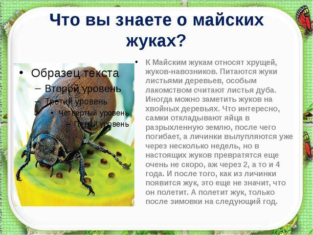 Что вы знаете о майских жуках? К Майским жукамотносят хрущей, жуков-навозник...