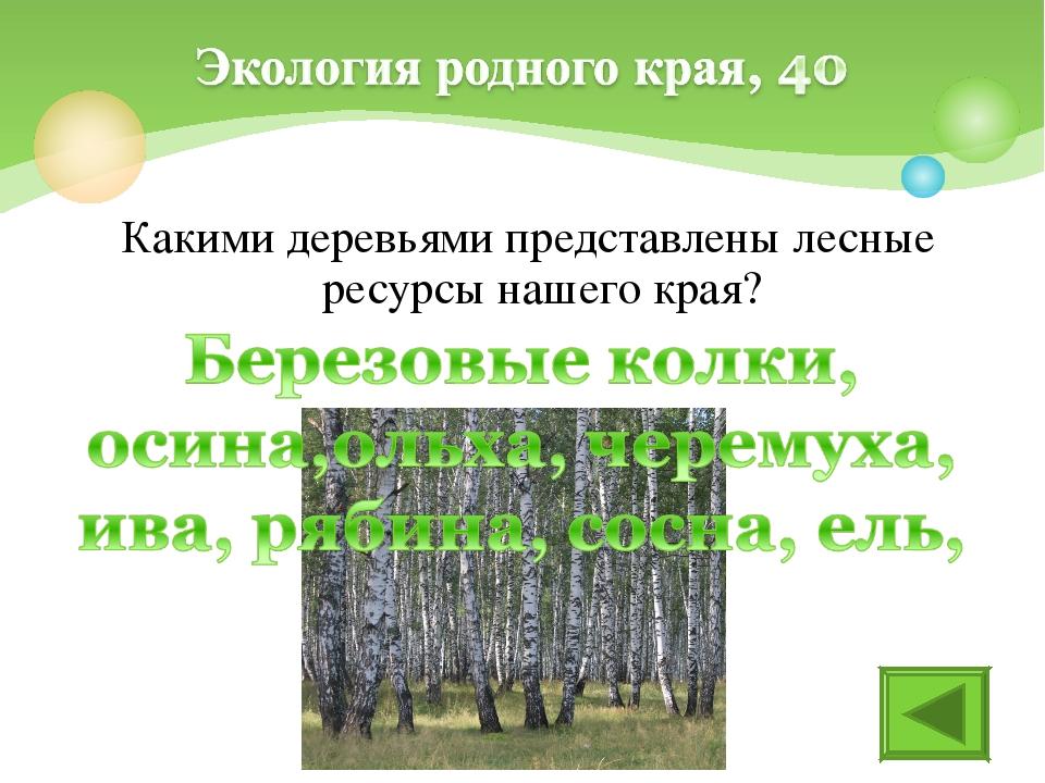 Какими деревьями представлены лесные ресурсы нашего края?