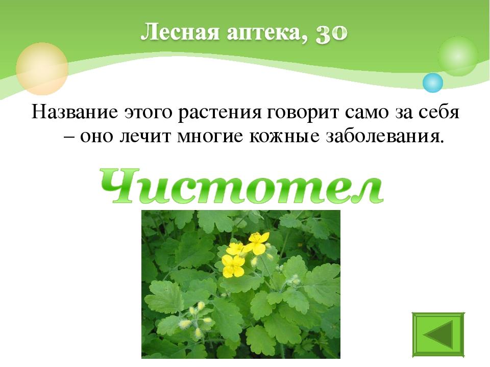 Название этого растения говорит само за себя – оно лечит многие кожные заболе...