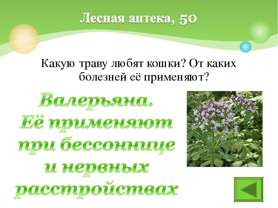 Какую траву любят кошки? От каких болезней её применяют?