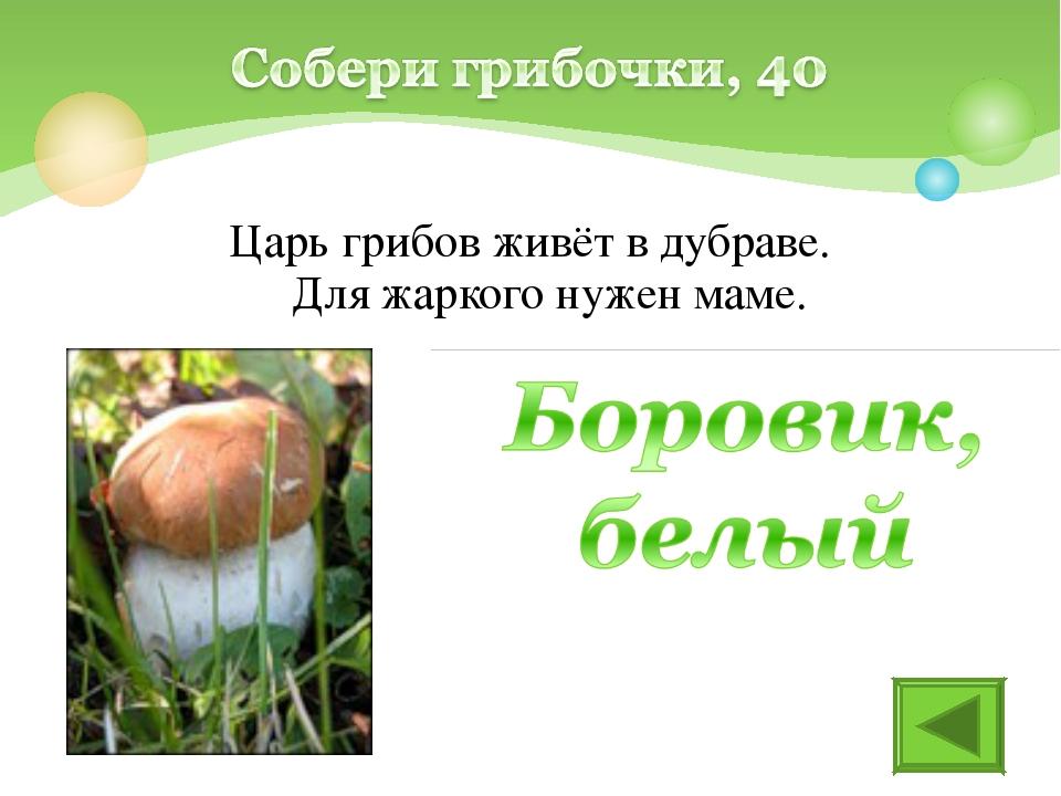 Царь грибов живёт в дубраве. Для жаркого нужен маме.