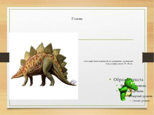Голова стегозавра была маленькой, по сравнению с размерами тела, в длину око