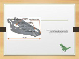 Голова оканчивалась роговым клювом, которым стегозавр срывал листву с низкор