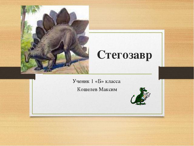 Стегозавр Ученик 1 «Б» класса Кошелев Максим