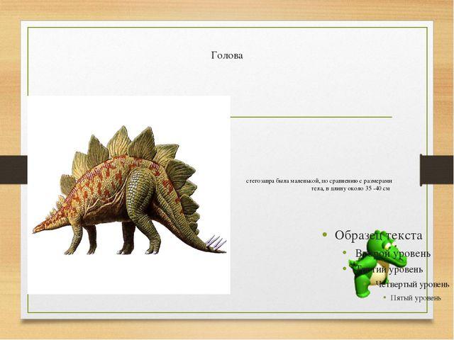 Голова стегозавра была маленькой, по сравнению с размерами тела, в длину око...
