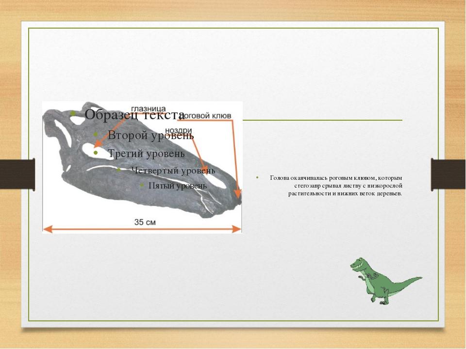 Голова оканчивалась роговым клювом, которым стегозавр срывал листву с низкор...