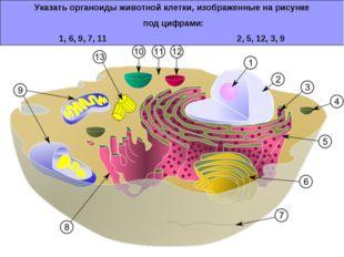 Указать органоиды животной клетки, изображенные на рисунке под цифрами: 1, 6,