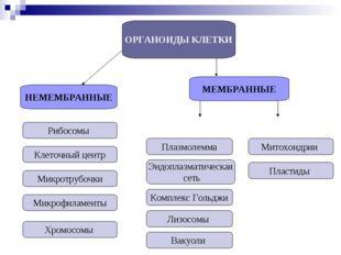 ОРГАНОИДЫ КЛЕТКИ НЕМЕМБРАННЫЕ МЕМБРАННЫЕ Рибосомы Клеточный центр Микротрубоч