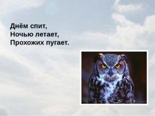 Непоседа пёстрая, Птица длиннохвостая, Птица говорливая, Самая болтливая. Вещ