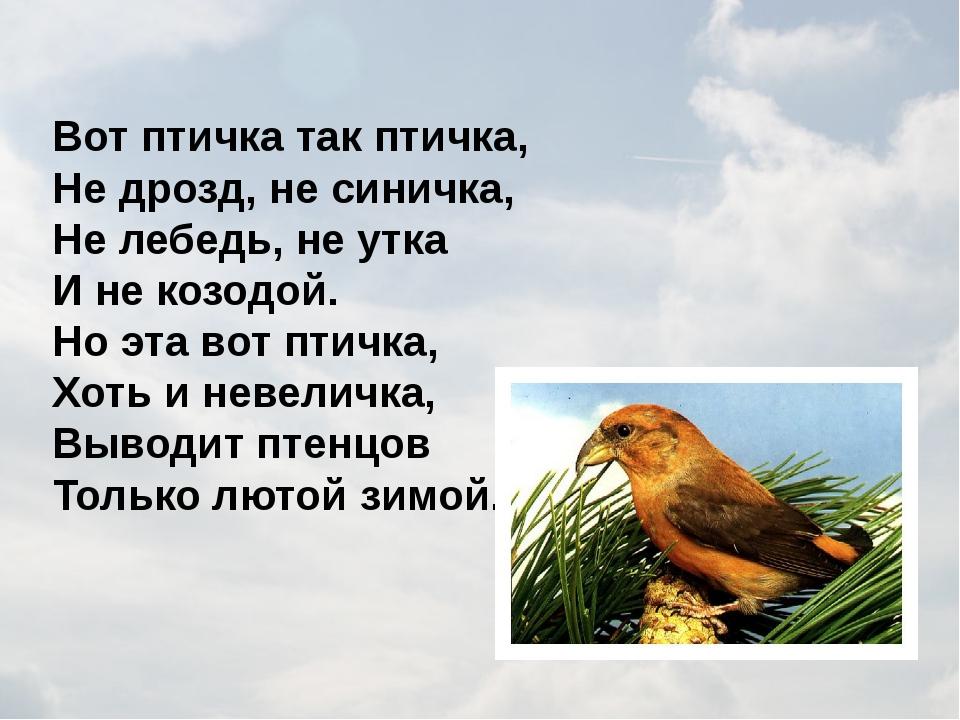 Вот птичка так птичка, Не дрозд, не синичка, Не лебедь, не утка И не козодой....