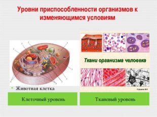 Уровни приспособленности организмов к изменяющимся условиям Клеточный уровень