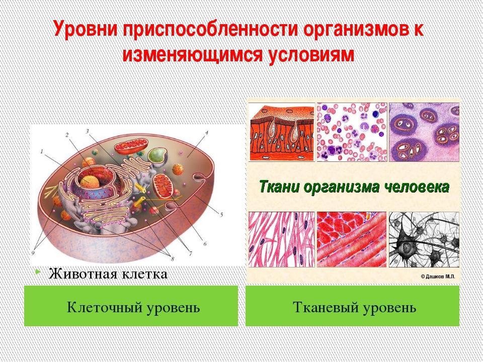 Уровни приспособленности организмов к изменяющимся условиям Клеточный уровень...