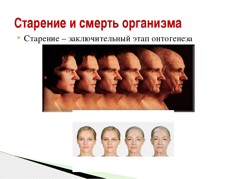 Старение и смерть организма Старение – заключительный этап онтогенеза