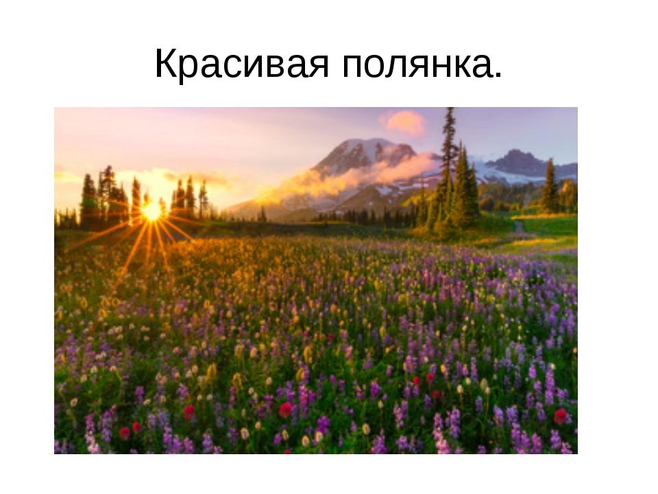 Красивая полянка.