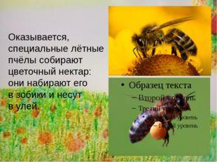 Оказывается, специальные лётные пчёлы собирают цветочный нектар: они набираю