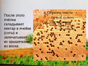 После этого пчёлка складывает нектар в ячейки (соты) и запечатывает их крыше