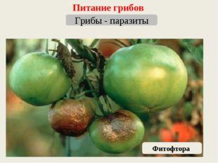 Питание грибов Грибы - паразиты