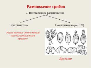 Размножение грибов 2. Вегетативное размножение Частями тела Почкованием (рис.