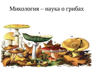 Микология – наука о грибах