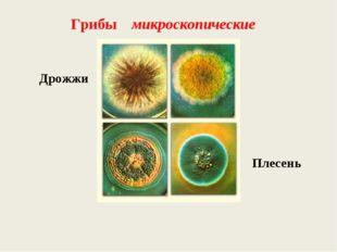 Дрожжи Грибы микроскопические Плесень