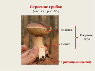 Строение грибов (стр. 191, рис. 125) Шляпка Ножка Грибница (мицелий) Плодовое