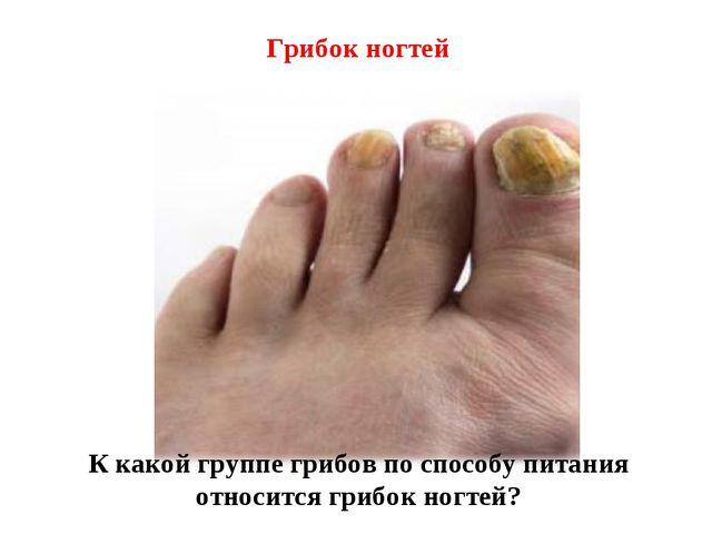 Грибок ногтей К какой группе грибов по способу питания относится грибок ногтей?