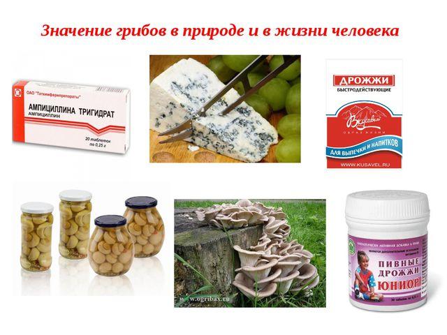 Значение грибов в природе и в жизни человека