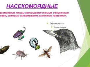 НАСЕКОМОЯДНЫЕ Насекомоядные птицы отличаются тонким, удлиненным клювом, котор