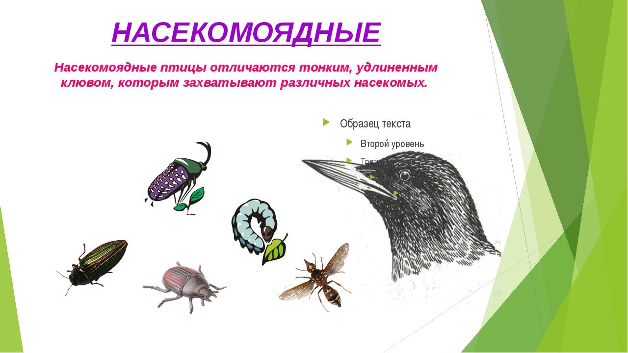 НАСЕКОМОЯДНЫЕ Насекомоядные птицы отличаются тонким, удлиненным клювом, котор...