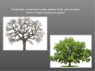 Почему буря, которая валит живые деревья летом, часто не может свалить стояще