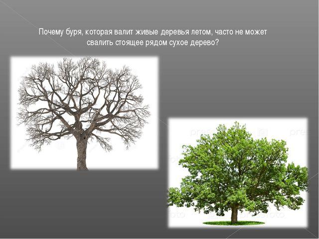 Почему буря, которая валит живые деревья летом, часто не может свалить стояще...