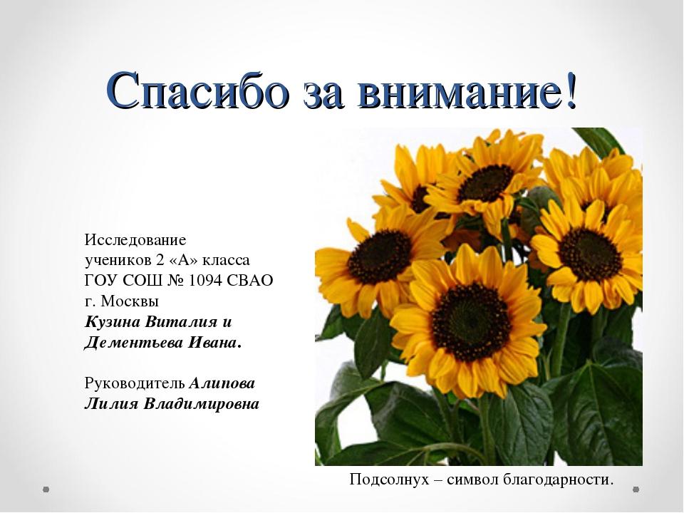 Спасибо за внимание! Подсолнух – символ благодарности. Исследование учеников...
