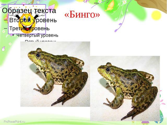 «Бинго» ProPowerPoint.ru