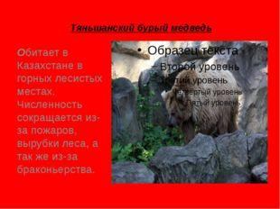 Тяньшанский бурый медведь Обитает в Казахстане в горных лесистых местах. Числ