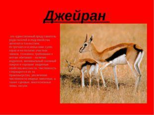 Джейран это единственный представитель рода газелей и подсемейства антилоп в