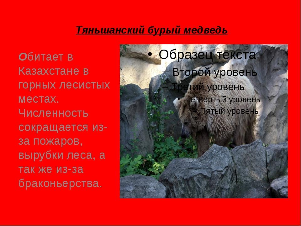 Тяньшанский бурый медведь Обитает в Казахстане в горных лесистых местах. Числ...