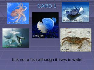 CARD 1 It is not a fish although it lives in water. a jelly-fish an octopus a