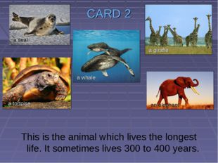CARD 2 This is the animal which lives the longest life. It sometimes lives 30