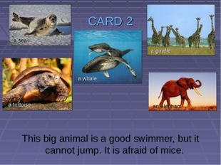 CARD 2 This big animal is a good swimmer, but it cannot jump. It is afraid of