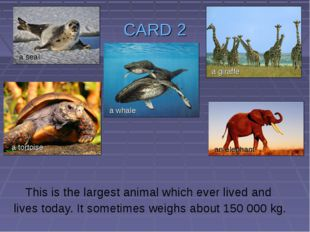 CARD 2 This is the largest animal which ever lived and lives today. It someti