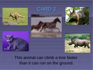 CARD 3 This animal can climb a tree faster than it can run on the ground. a k