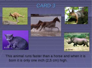 CARD 3 This animal runs faster than a horse and when it is born it is only on