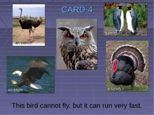 CARD 4 This bird cannot fly, but it can run very fast. an ostrich an owl an e