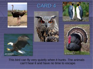 CARD 4 This bird can fly very quietly when it hunts. The animals can't hear i