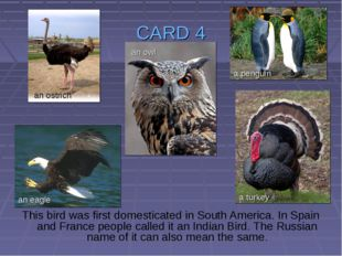 CARD 4 This bird was first domesticated in South America. In Spain and France