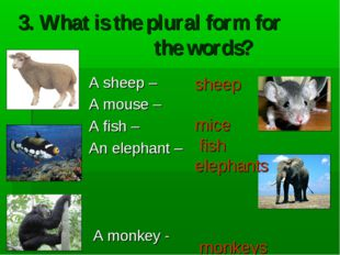3. What is the plural form for the words? A sheep – A mouse – A fish – An ele